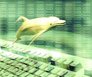 Digital Culture's Dolphin, Jumping with Joy