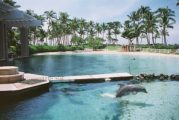 Dolphin hotel pictures