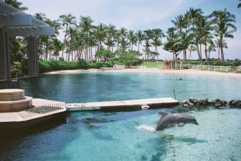dolphin hotel pictures - landscape in hawai