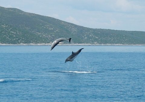 jumping dolphins - pictures of dolphins