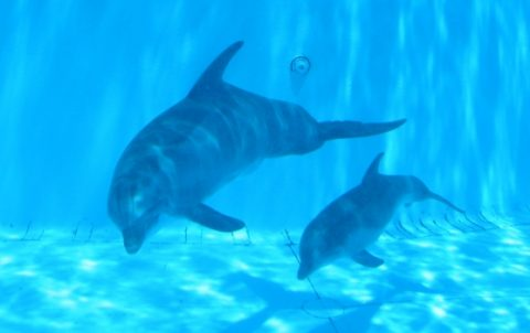 Pictures of baby dolphins