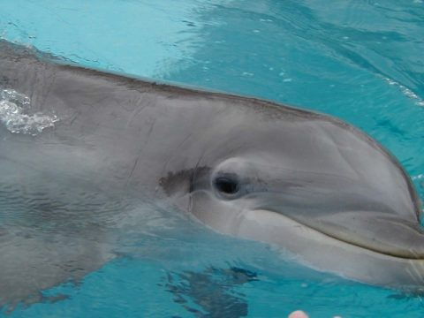 Picture of a smiling dolphin