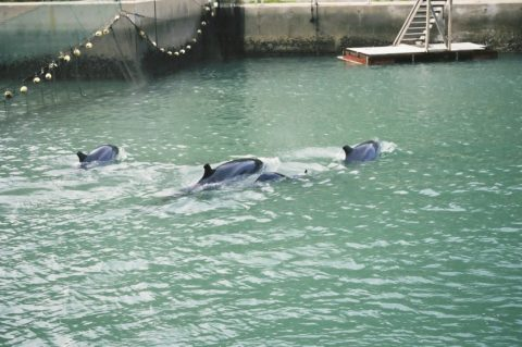 Swim with dophins - pictures of dolphins in mothin