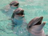 Smiling dolphin pictures